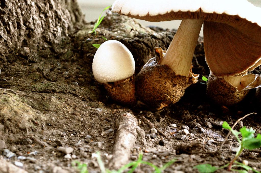 365-21e Mushroom family
