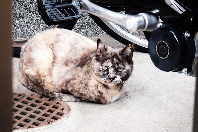 Today's Cat@2011-07-03