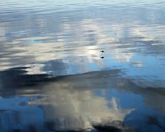 Bird flying over Penobscot Bay (dblbright) Tags: islesboro