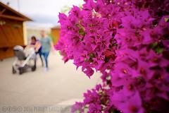 PLW_5540 (Laszlo Perger) Tags: wien vienna sterreich austria blumengarten hirschstetten flowergarden