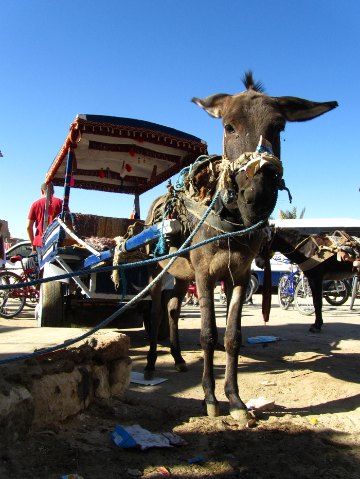 Donkey Cart at Siwa Oasis