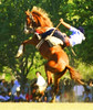 Arriesgando (Eduardo Amorim) Tags: horses horse southamerica argentina caballo cheval caballos cavalos pferde cavalli cavallo cavalo gauchos pferd pampa hest hevonen chevaux paard gaucho 馬 américadosul häst gaúcho 말 campero amériquedusud provinciadebuenosaires лошадь gaúchos 马 sudamérica sanantoniodeareco suramérica américadelsur סוס areco südamerika jineteada حصان άλογο pampaargentina camperos americadelsud gineteada ม้า americameridionale campeiros campeiro eduardoamorim iayayam yamaiay pampaargentino ঘোড়া