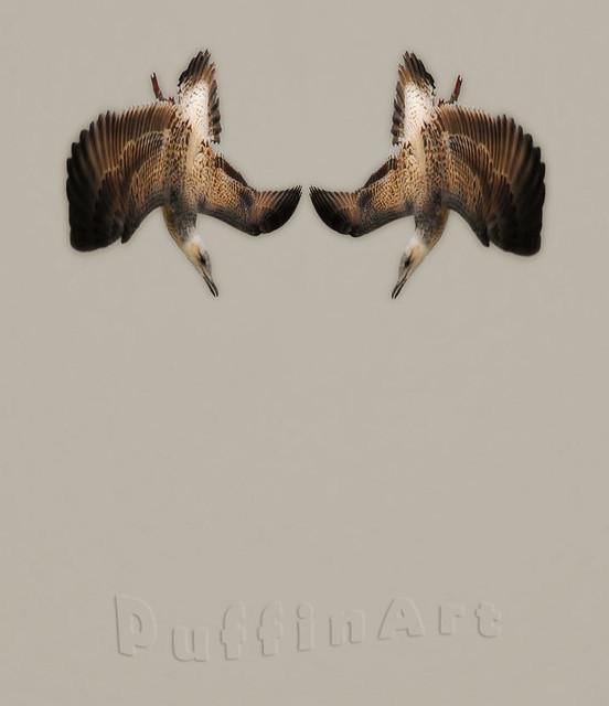 Gulls Ballet
