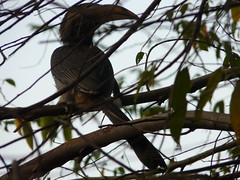 P1150643 (babsybou) Tags: travel india birds silent watching kerala du valley yatra sud inde attapadi birdswatching babsybou malleeshwaramjunglelodge pettickal