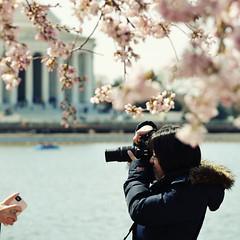 Sakura shooter 2 (Kohei Ueda (f.k.a. Lindeberg Feller)) Tags: camera people lake color ex square cherry washingtondc dc spring nikon shoot crossprocess candid blossoms sigma apo ii 桜 sakura cherryblossoms nik f28 jeffersonmemorial tidalbasin 2011 hsm 50150mm colorefexpro d7000