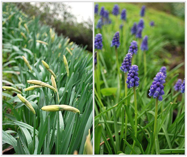Picnik collage-Spring
