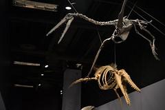 Suspended Fossils (abiodork) Tags: socialscience sciencemuseumofminnesota