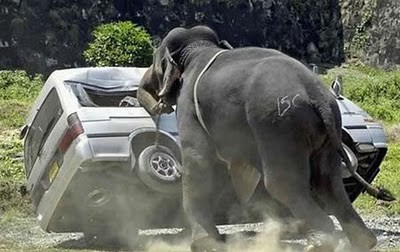 animals_attacking_cars_15