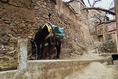 Rural Scene, Morocco (jcm715) Tags: mountains stone rural buildings village northafrica path traditional transport donkey atlasmountains morocco berber alleyway tradition