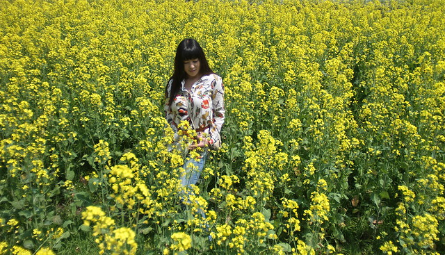 Amidst the rapeseed flowers...