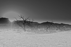 DSC_2362.jpg ((Mr. Rager)) Tags: trees sunset arizona urban abandoned nevada exploration mojavedesert d7000