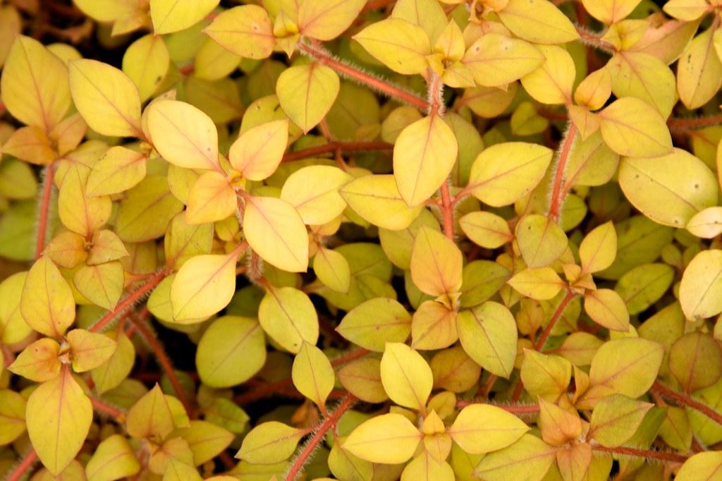 mystery foliage  086