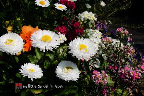 spring-in-tokyo-11