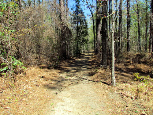 Trail Weymouth Woods SP 1848