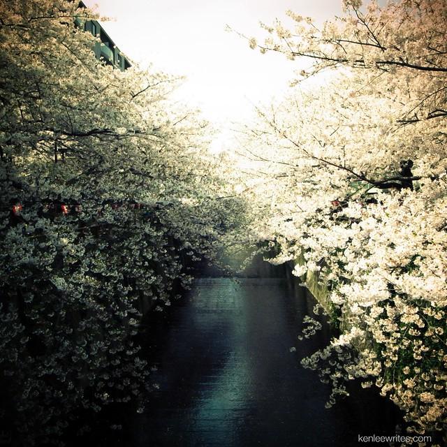 Sakura on both sides