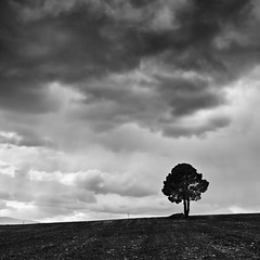 The Lonely Tree II (Final) (DavidFrutos) Tags: bw mountains tree monochrome field pine clouds square landscape monocromo interestingness paisaje bn explore murcia nubes rbol campo lonely minimalism minimalismo pino canondslr solitario montaas canon1740mm flickraward platinumheartaward interesantsimo davidfrutos 5dmarkii niksilverefexpro redmatrix losroyos flickraward5