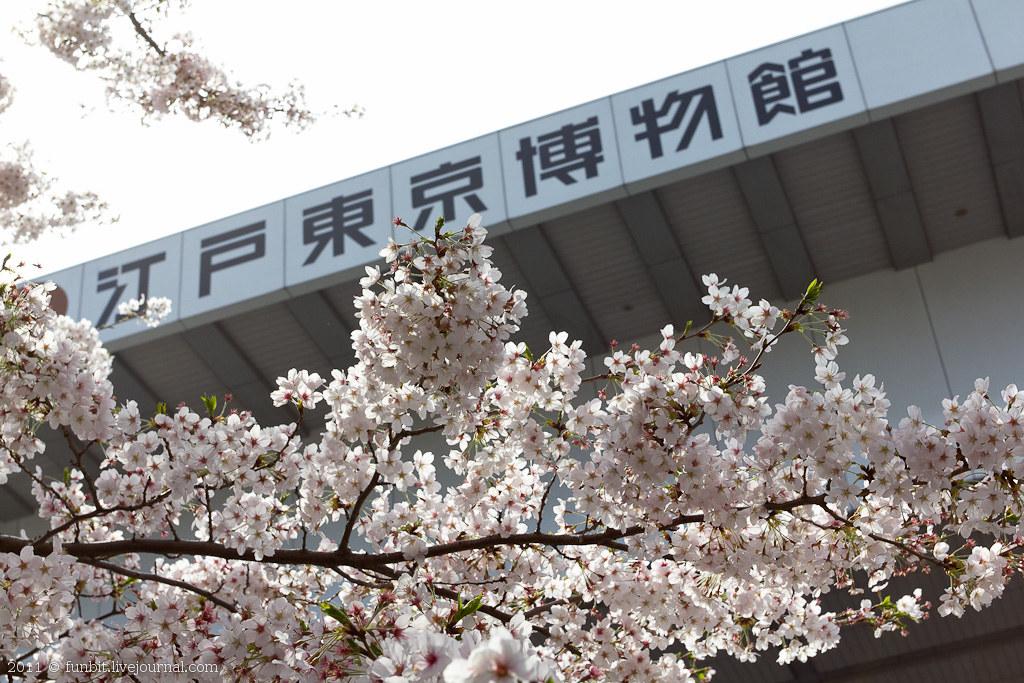 Tokyo Ryogoku Sakura 10