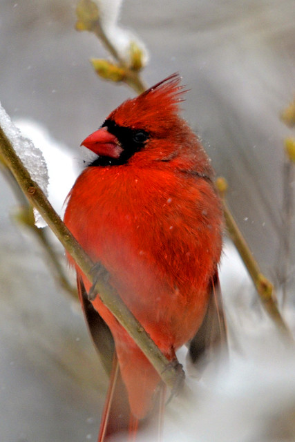last storm cardinal two