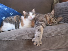 Sleepin' friends. (MTBradley) Tags: cats pets chats paw joey perspective couch catnap lee bailey mascotas pata gatas berkshirecounty