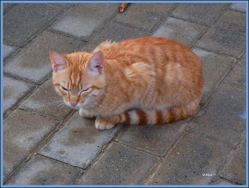 Gato by Miguel Allué Aguilar