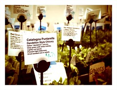 farmer's market (pictorialpostcard) Tags: nyc newyorkcity plants ny newyork price farmersmarket tags labels unionsquare