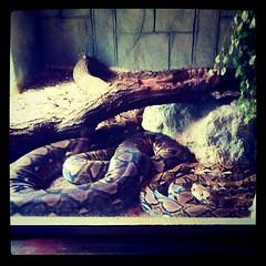 Epic python