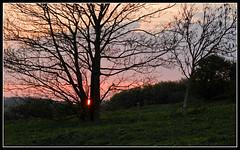 Sunset over Lancing Ring (Azurian Vista) Tags: world light sunset sun west tree nature set night sussex nikon natural low ring lancing d7000