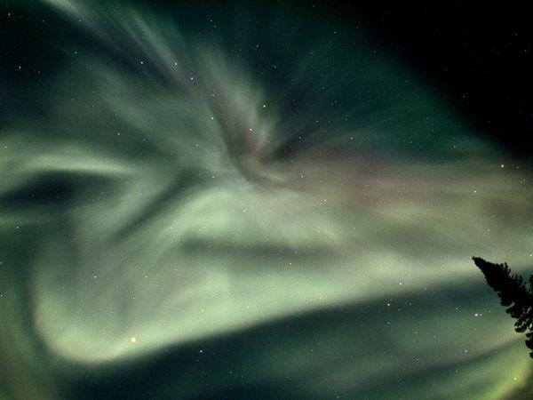northern-canada-rosing_1461_600x450