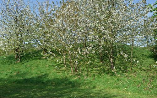 wallpaper springtime. trees wallpaper spring blossom