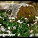 Reid Park Zoo, Tucson, AZ