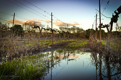 Spring is here (Pepe Cam Photography) Tags: california 2 reflection clouds canon vineyard spring wine mark sonoma ii valley napa 5d hdr