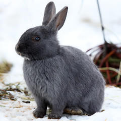 The Cute One (Oscar von Bonsdorff) Tags: cute rabbit bunny smart canon suomi finland studio zoo helsinki funny finnland sweet good fine pro helsingfors elegant fin lapin photographing kaninchen xsi veryfunny korkeasaari canon100400 coniglio  kanin st helsinkizoo canon100400l 100400l canonef100400mmf4556lisusm hgholmen sp domesticrabbit 450d  100400f4556l  canon100400isusm hauskaninchen canonefl canonis100400    oscarvonbonsdorff  zooinfinland zooinhelsinki finlandsbiggestzoo elintarhasuomessa canonf45l gettyimagesfinlandq1 tamkanin adatavan lapindomestique