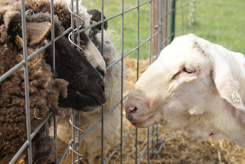 Shearing '11: Agnes visits the inmates