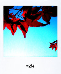 "#Yesterdays #Dailypolaroid #214 #fb • <a style=""font-size:0.8em;"" href=""http://www.flickr.com/photos/47939785@N05/5647284572/"" target=""_blank"">View on Flickr</a>"