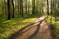Path (Ulrich J) Tags: trees backlight landscape denmark spring flickr trer ulrich danmark kge landskab forr modlys sen jakobsson vanagram