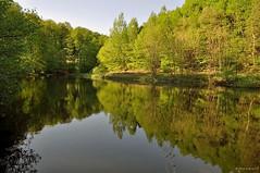 Reflets printanier (Excalibur67) Tags: water forest landscape spring nikon arbres alsace reflexion reflets printemps paysages d90 tangs vosgesdunord forts