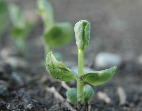The Strength of a Seed