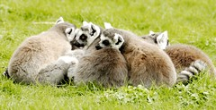 Group Hug!! by Andrew Pescod, on Flickr