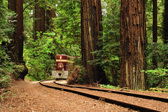 Roaring Camp Railroad (J-Fish) Tags: railroad trees nature train tracks redwoods henrycowell roaringcamprailroad sequoiasempervirens henrycowellstatepark bigtreespacific d300s 1685mmf3556gvr 1685mmvr