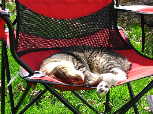 Murderface Outdoor Napping