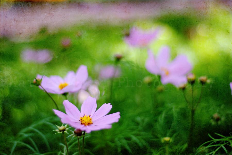 Garden Center - Purple & Dainty