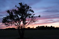 Hersall Tree (neiltate) Tags: sunset sky cloud tree silhouette evening coventry earlsdon hersallcommon
