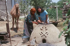 TKM 2000-015-S10 (Peace Corps) Tags: food animals volunteers camel peacecorps turkmenistan volunteerworking