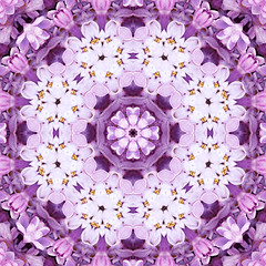 lilac lace love (SueO'Kieffe) Tags: nature digital photoshop patterns kaleidoscope mandala spirituality