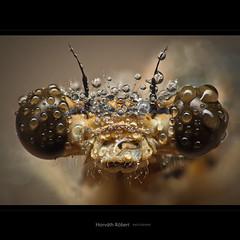 Szemcsepp (Mikrobi1989) Tags: macro hungary fuji es magyarorszg dcr250 raynox rovar bogr kaposvr szem makr portr csepp szemek szitakt s9600 szemben escseppek mikrobi