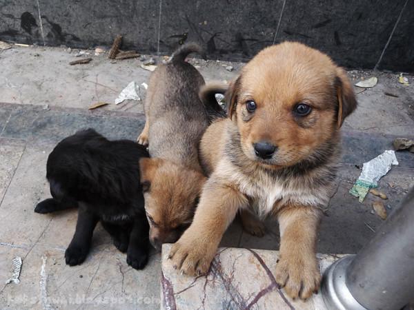 Dalhousie Pups