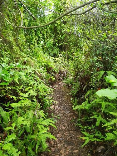 20110513 Spider Short Trail/Jungle Run