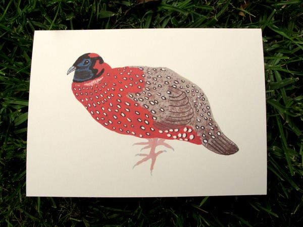 pheasant2-72