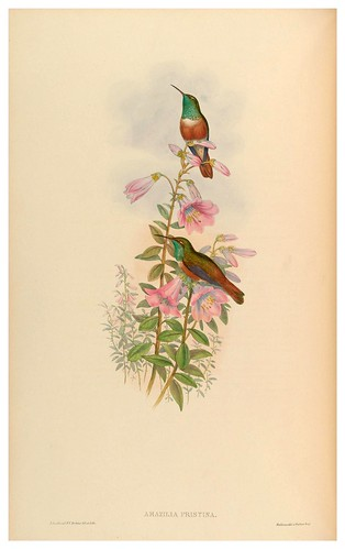 018-An introduction to the Trochilidae or family of humming-birds- Vol 5- 1861-John Gould