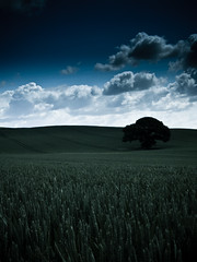 Cardiff - Wheat Fields (lukewebber) Tags: blue sky white tree green clouds oak shadows farm wheat highlights